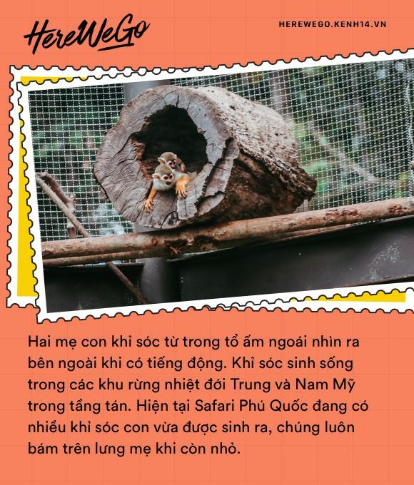 Ngắm những cặp mẹ con thú hoang dã đáng yêu ở Vinpearl Safari Phú Quốc - Ảnh 1.