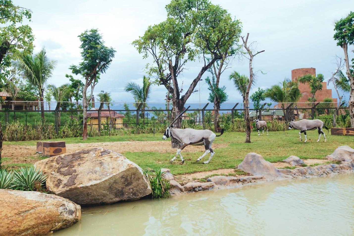 Một vòng khám phá River Safari - Công viên bảo tồn động vật hoang dã trên sông tại Hội An - Ảnh 1.