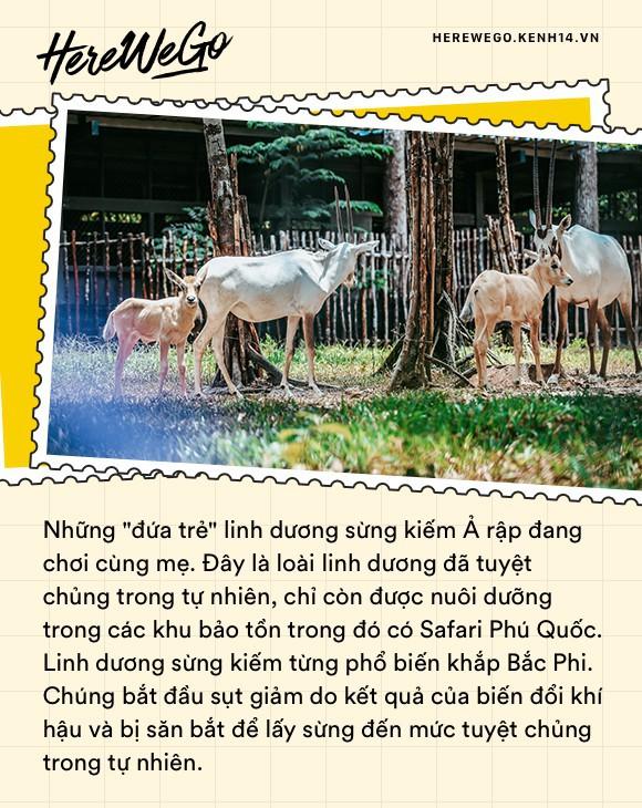 Ngắm những cặp mẹ con thú hoang dã đáng yêu ở Vinpearl Safari Phú Quốc - Ảnh 3.