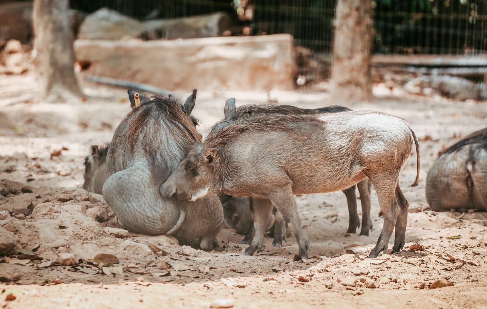 Ngắm những cặp mẹ con thú hoang dã đáng yêu ở Vinpearl Safari Phú Quốc - Ảnh 5.