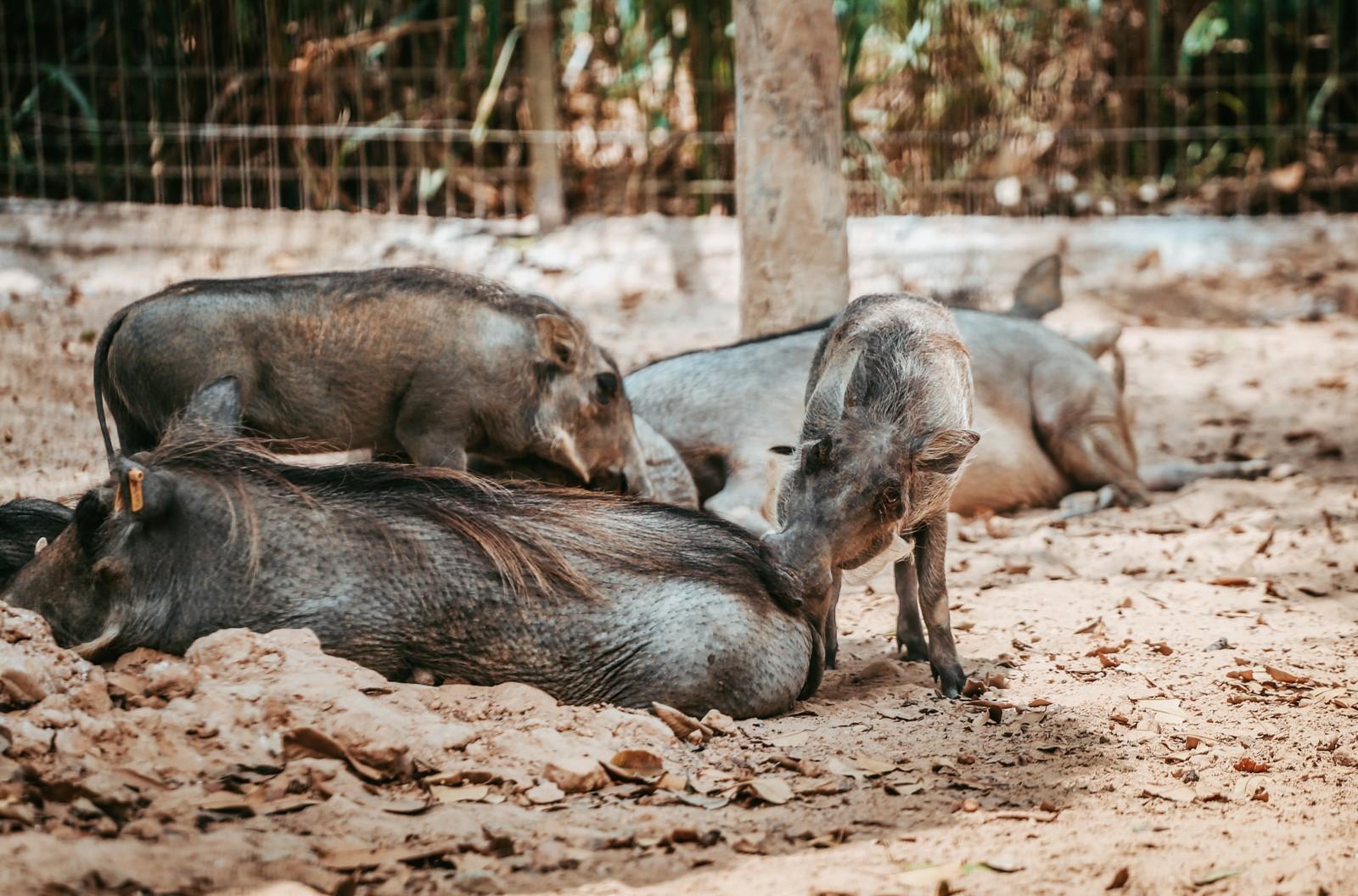Ngắm những cặp mẹ con thú hoang dã đáng yêu ở Vinpearl Safari Phú Quốc - Ảnh 6.