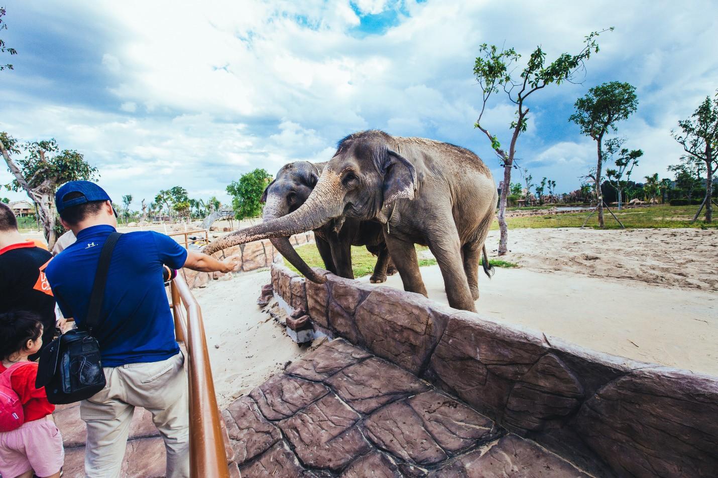 Một vòng khám phá River Safari - Công viên bảo tồn động vật hoang dã trên sông tại Hội An - Ảnh 4.