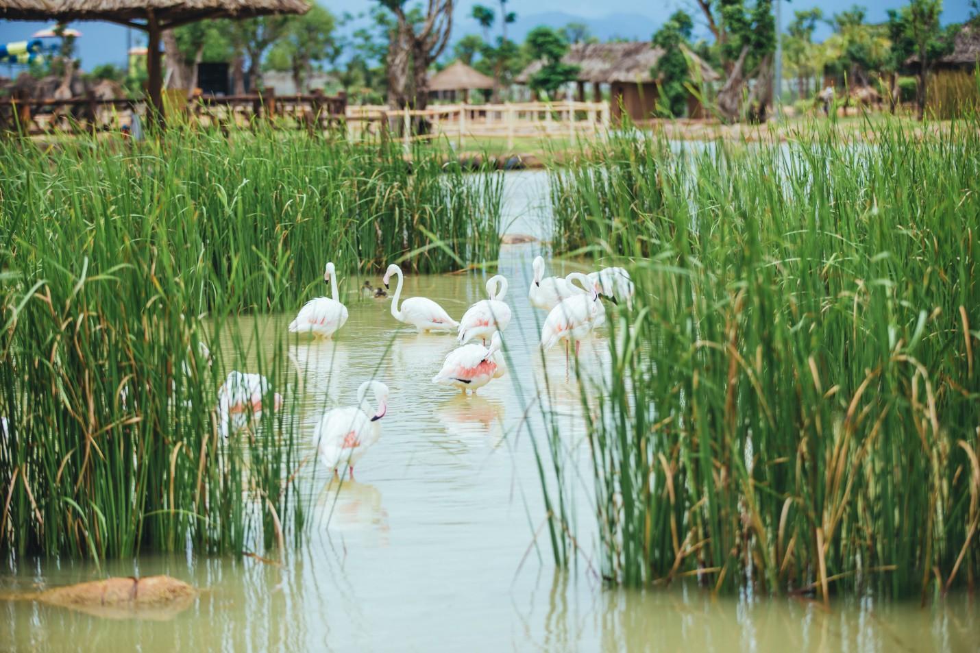 Một vòng khám phá River Safari - Công viên bảo tồn động vật hoang dã trên sông tại Hội An - Ảnh 5.