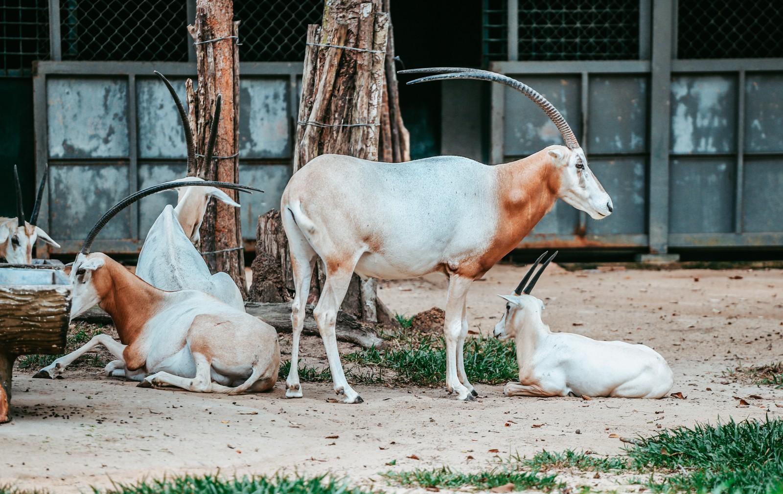 Ngắm những cặp mẹ con thú hoang dã đáng yêu ở Vinpearl Safari Phú Quốc - Ảnh 8.