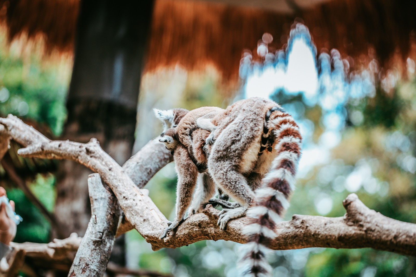 Ngắm những cặp mẹ con thú hoang dã đáng yêu ở Vinpearl Safari Phú Quốc - Ảnh 15.