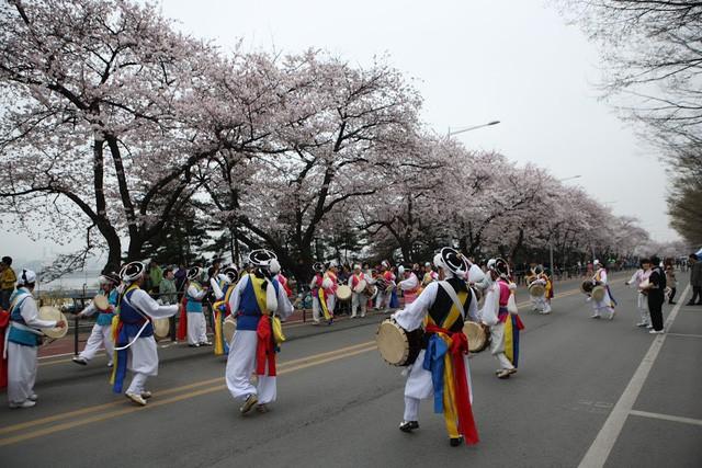 """Đến xứ Hàn, đừng quên """"mục sở thị"""" những thiên đường hoa anh đào tuyệt đẹp này - Ảnh 4."""