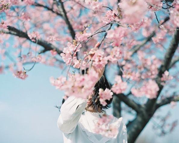 Lướt Instagram từ Âu đến Á là biết mùa hoa anh đào tuyệt đẹp đã thực sự đến rồi! - Ảnh 10.