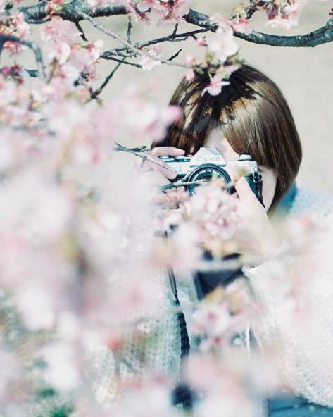 Lướt Instagram từ Âu đến Á là biết mùa hoa anh đào tuyệt đẹp đã thực sự đến rồi! - Ảnh 11.