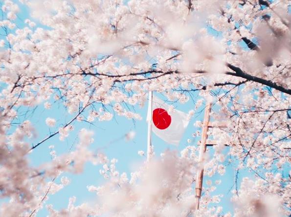 Lướt Instagram từ Âu đến Á là biết mùa hoa anh đào tuyệt đẹp đã thực sự đến rồi! - Ảnh 2.