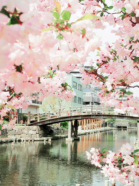 Lướt Instagram từ Âu đến Á là biết mùa hoa anh đào tuyệt đẹp đã thực sự đến rồi! - Ảnh 18.