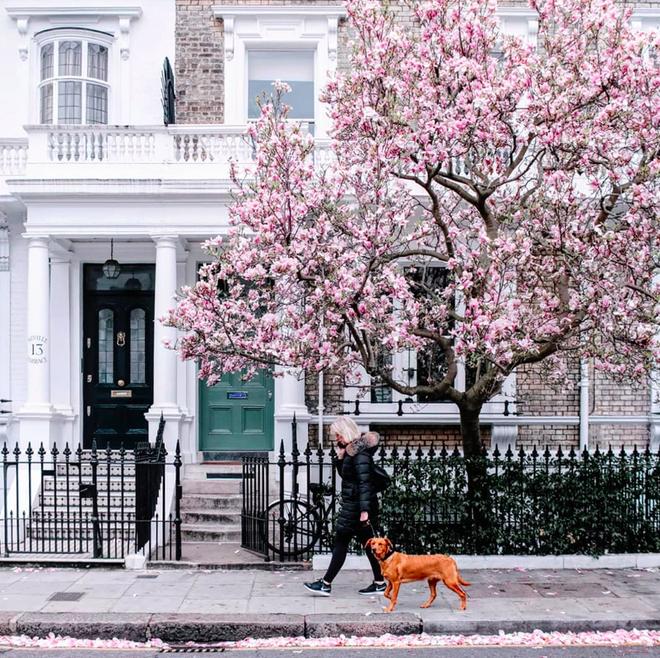 Lướt Instagram từ Âu đến Á là biết mùa hoa anh đào tuyệt đẹp đã thực sự đến rồi! - Ảnh 23.