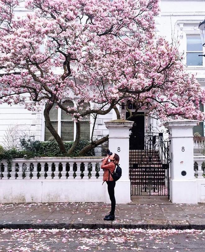 Lướt Instagram từ Âu đến Á là biết mùa hoa anh đào tuyệt đẹp đã thực sự đến rồi! - Ảnh 25.