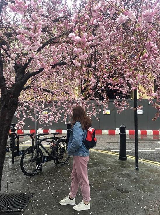 Lướt Instagram từ Âu đến Á là biết mùa hoa anh đào tuyệt đẹp đã thực sự đến rồi! - Ảnh 26.