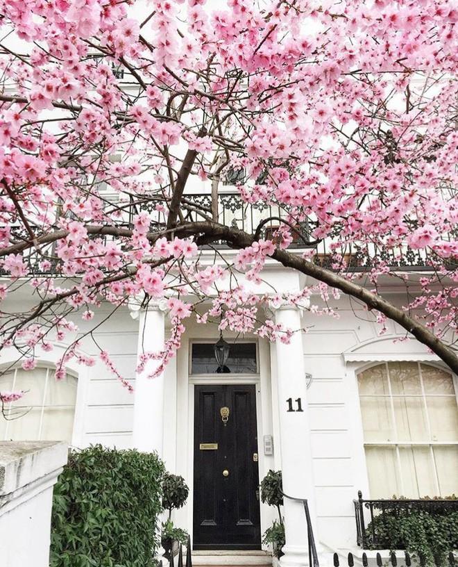 Lướt Instagram từ Âu đến Á là biết mùa hoa anh đào tuyệt đẹp đã thực sự đến rồi! - Ảnh 27.