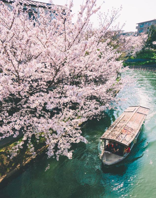 Lướt Instagram từ Âu đến Á là biết mùa hoa anh đào tuyệt đẹp đã thực sự đến rồi! - Ảnh 6.