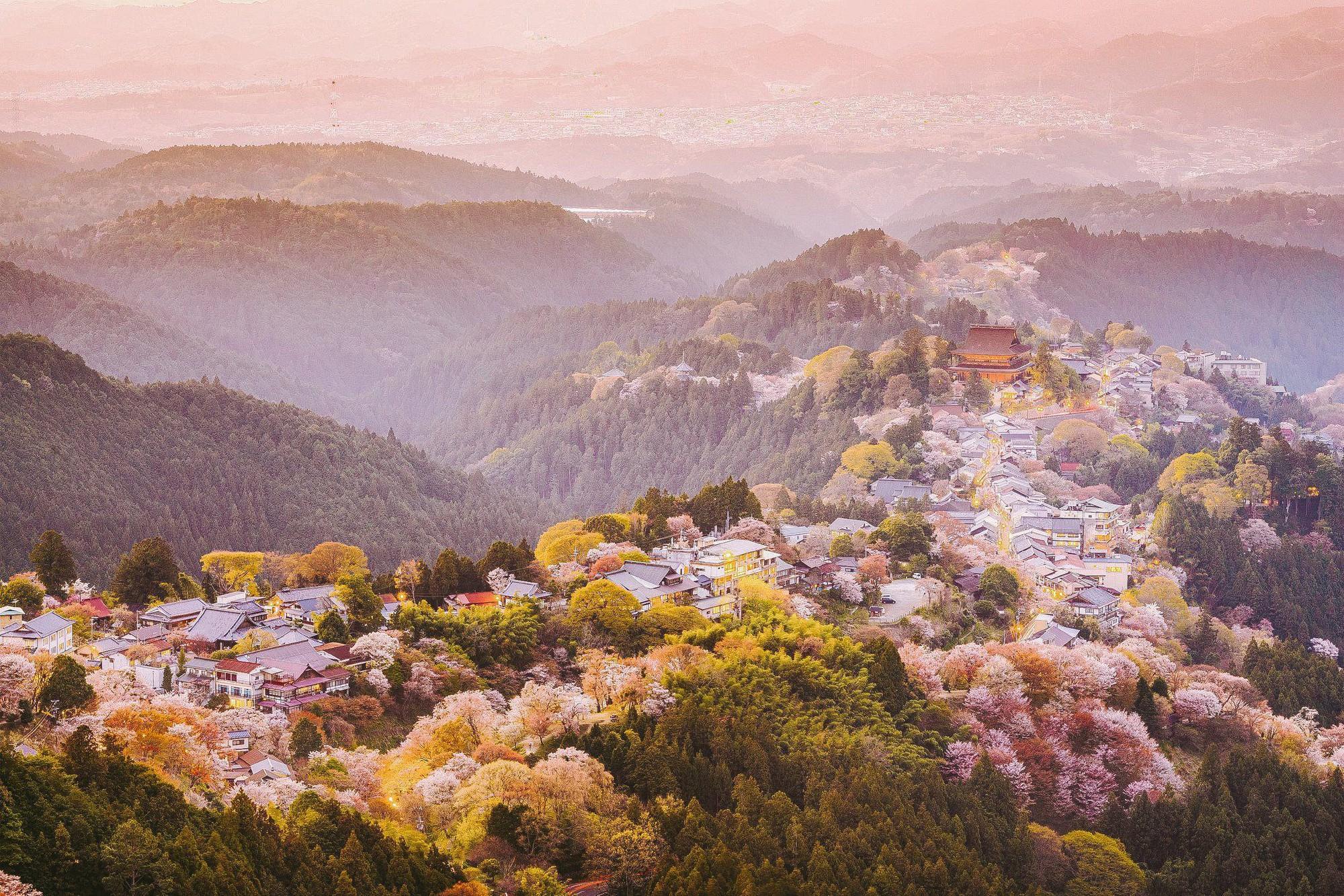 """Cánh rừng với 50.000 cây hoa anh đào ở Nhật Bản, """"nhuộm hồng"""" cả một quả núi và đẹp đến khó tin! - Ảnh 1."""