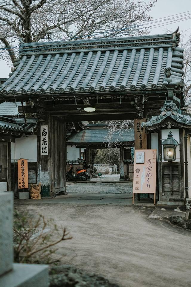 """Cánh rừng với 50.000 cây hoa anh đào ở Nhật Bản, """"nhuộm hồng"""" cả một quả núi và đẹp đến khó tin! - Ảnh 3."""
