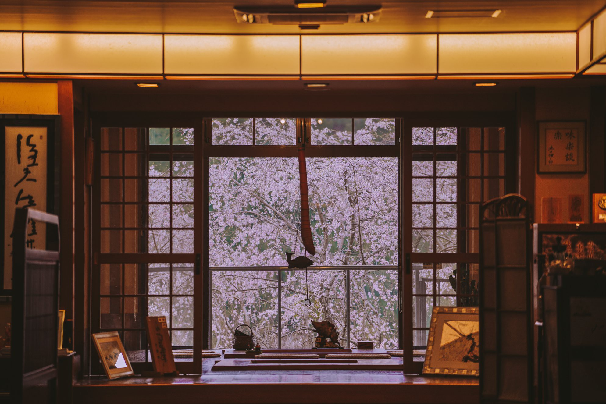"""Cánh rừng với 50.000 cây hoa anh đào ở Nhật Bản, """"nhuộm hồng"""" cả một quả núi và đẹp đến khó tin! - Ảnh 6."""