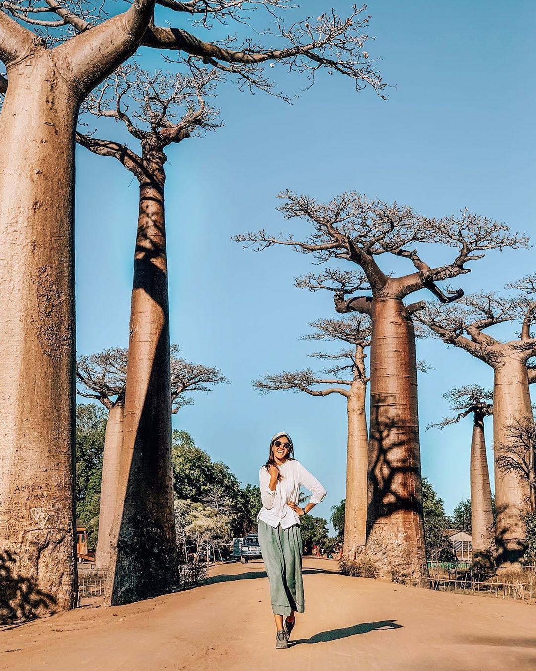 Dính phải lời nguyền phải mọc ngược, rừng cây ở Madagascar nay lại trở thành điểm check-in xịn xò của giới blogger du lịch - Ảnh 2.