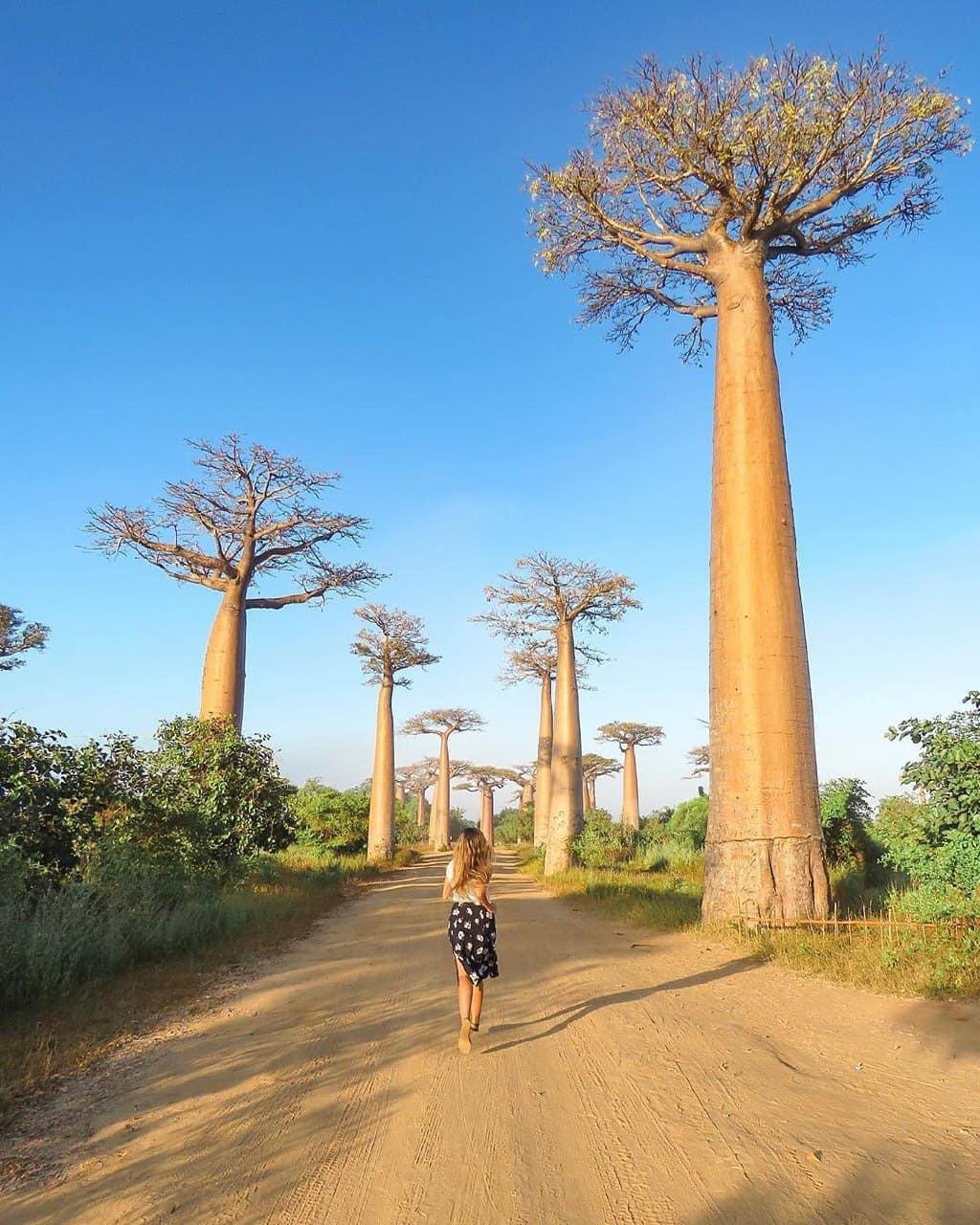 Dính phải lời nguyền phải mọc ngược, rừng cây ở Madagascar nay lại trở thành điểm check-in xịn xò của giới blogger du lịch - Ảnh 5.