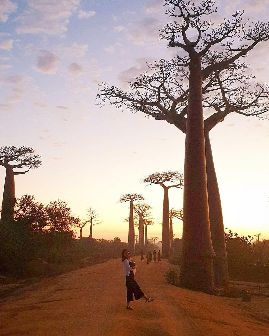 Dính phải lời nguyền phải mọc ngược, rừng cây ở Madagascar nay lại trở thành điểm check-in xịn xò của giới blogger du lịch - Ảnh 8.