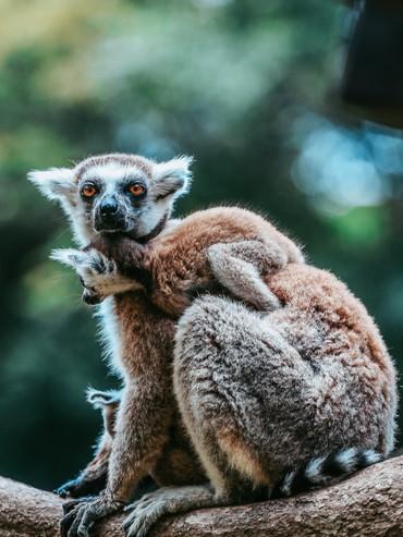 Ngắm những cặp mẹ con thú hoang dã đáng yêu ở Vinpearl Safari Phú Quốc